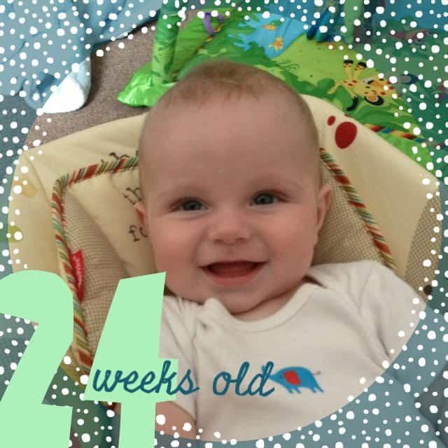 24 weeks old