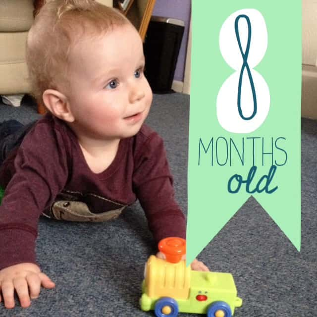 little mr 8 months