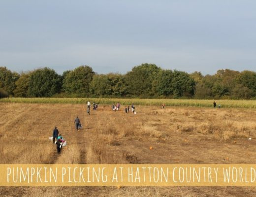 Hatton Country World Pumpkin