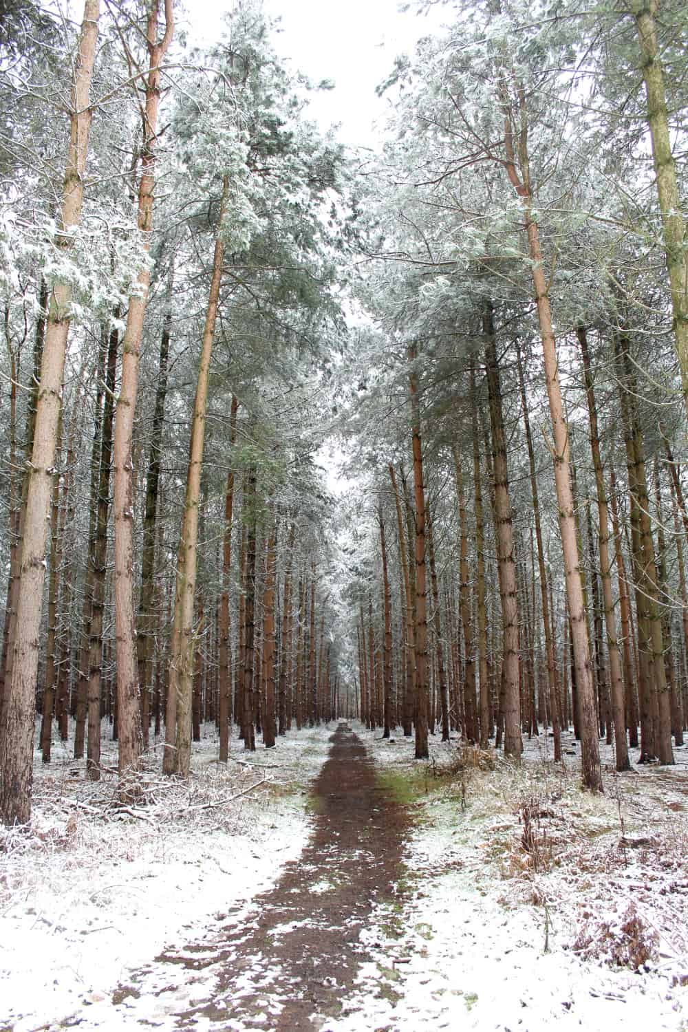 Birches Valley, Cannock Chase