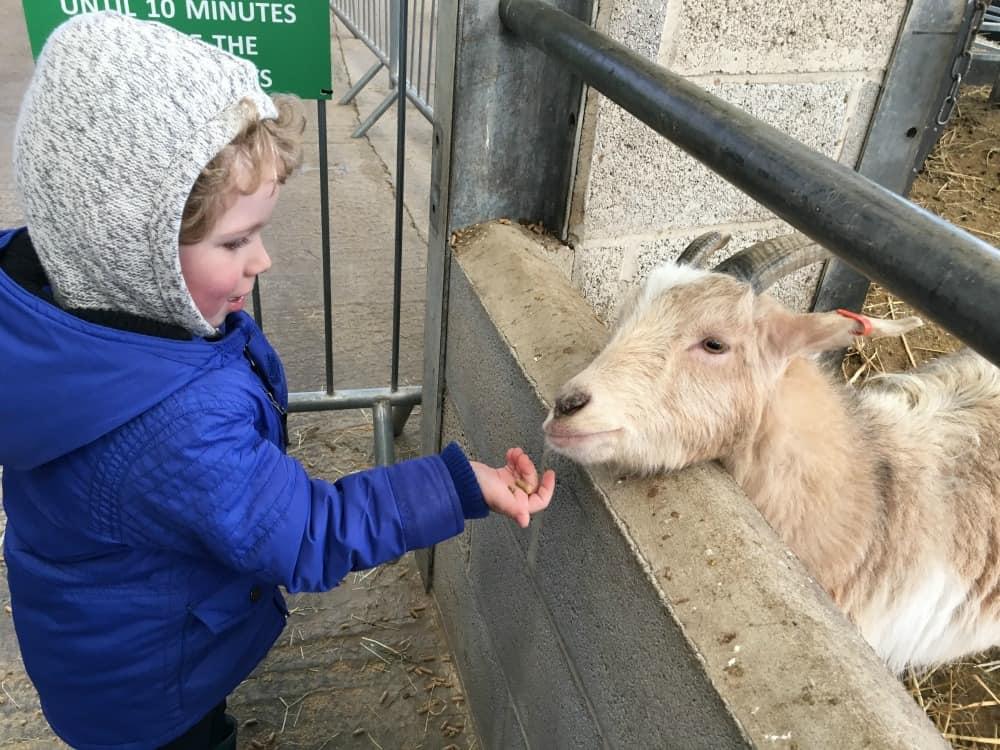 National Forest Adventure Farm Feeding a Goat