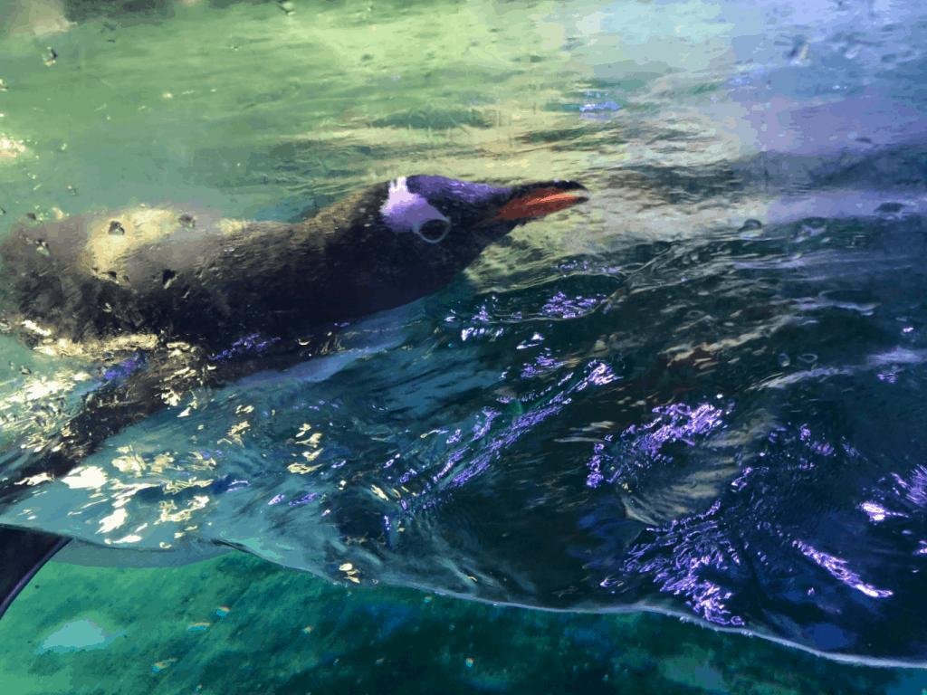 Penguins Sea Life Birmingham