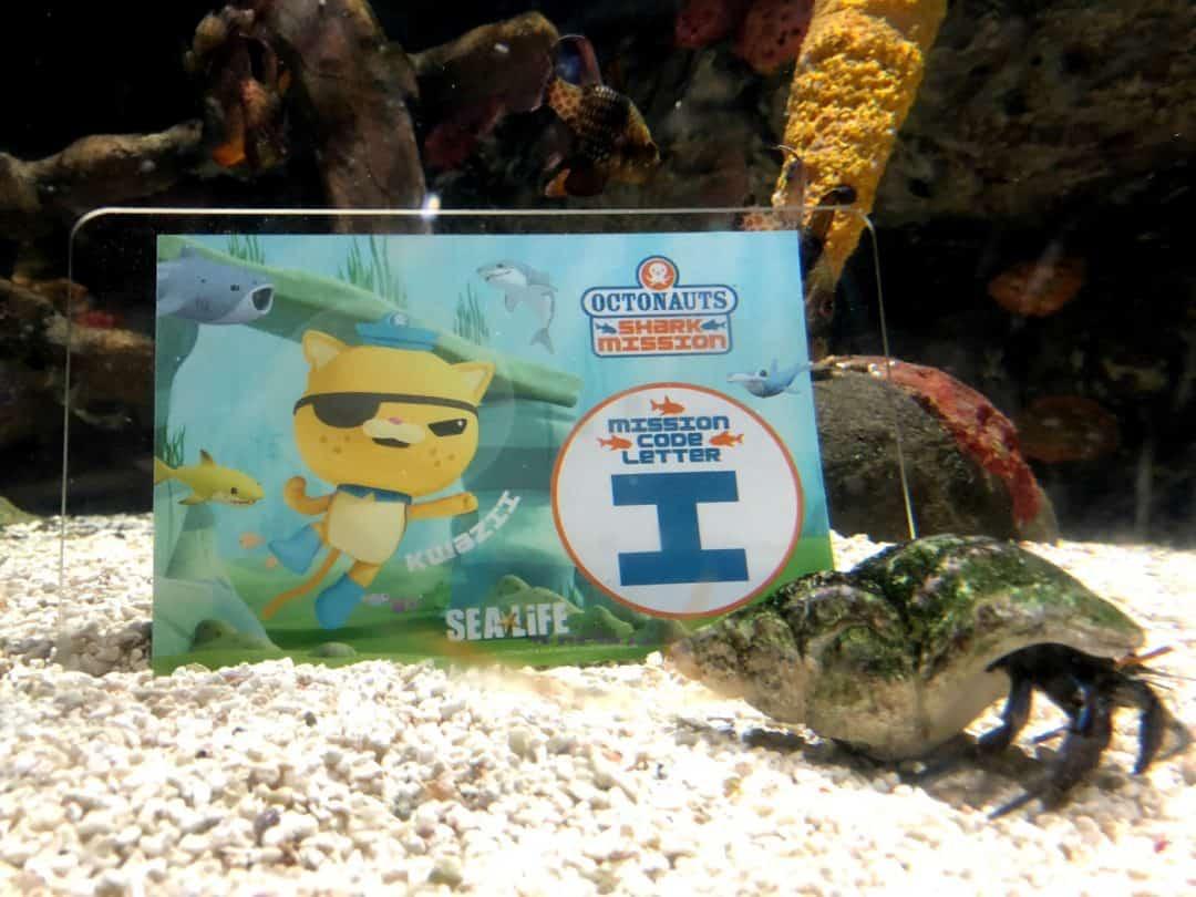 Shark Mission Sea Life Birmingham