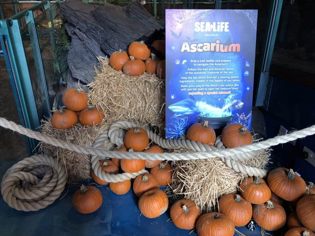 Birmingham Sea Life Spooky Halloween decorations