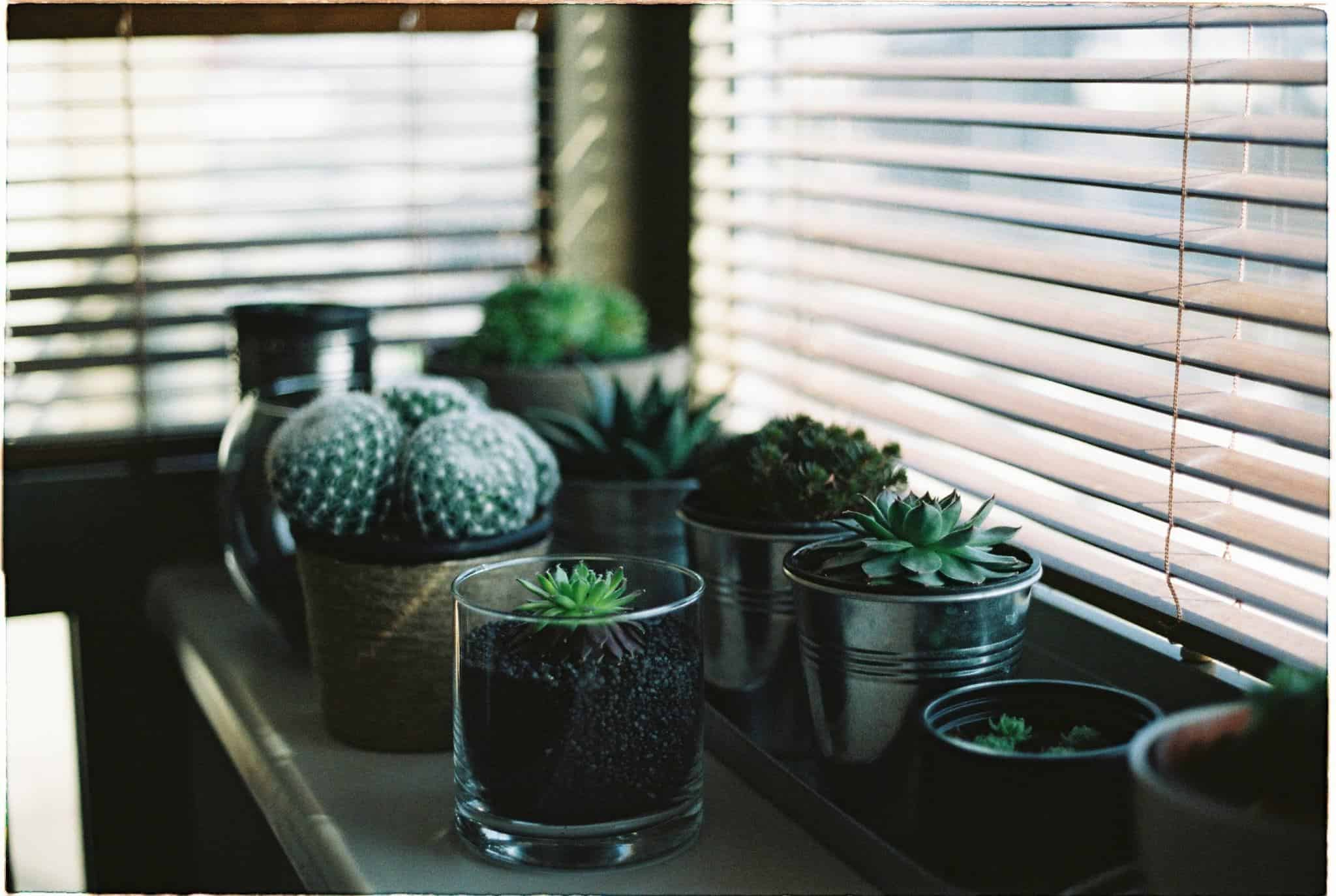 succulents blinds