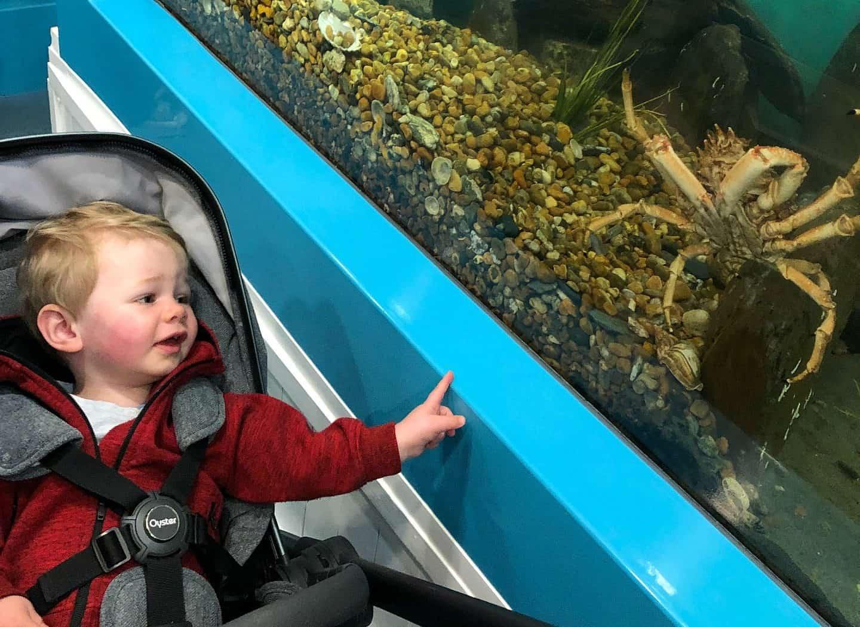 Mevagissey Aquarium