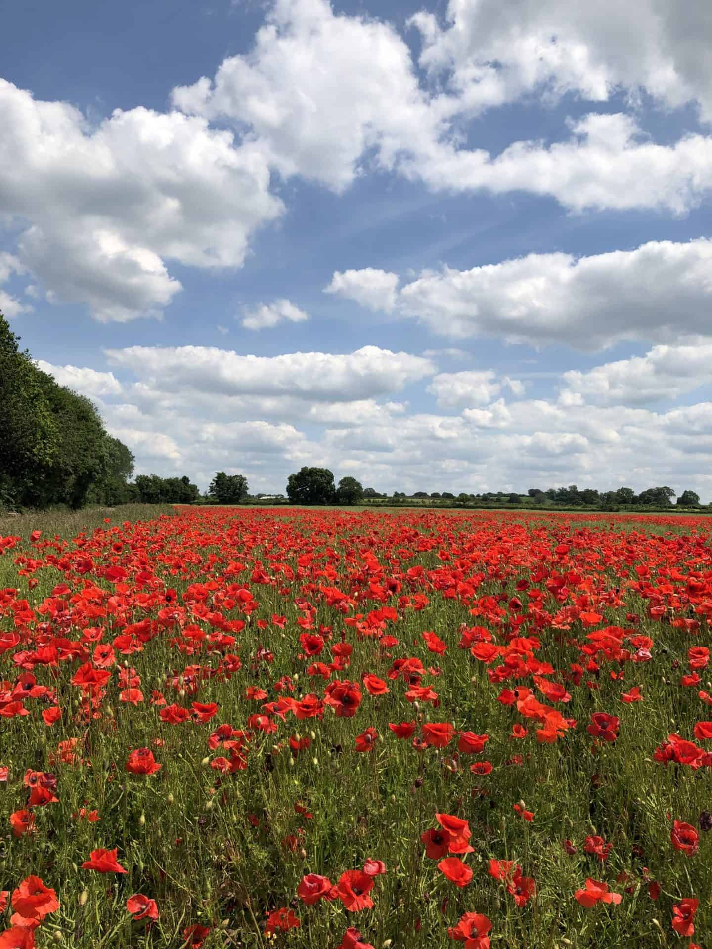 poppy fields Shropshire