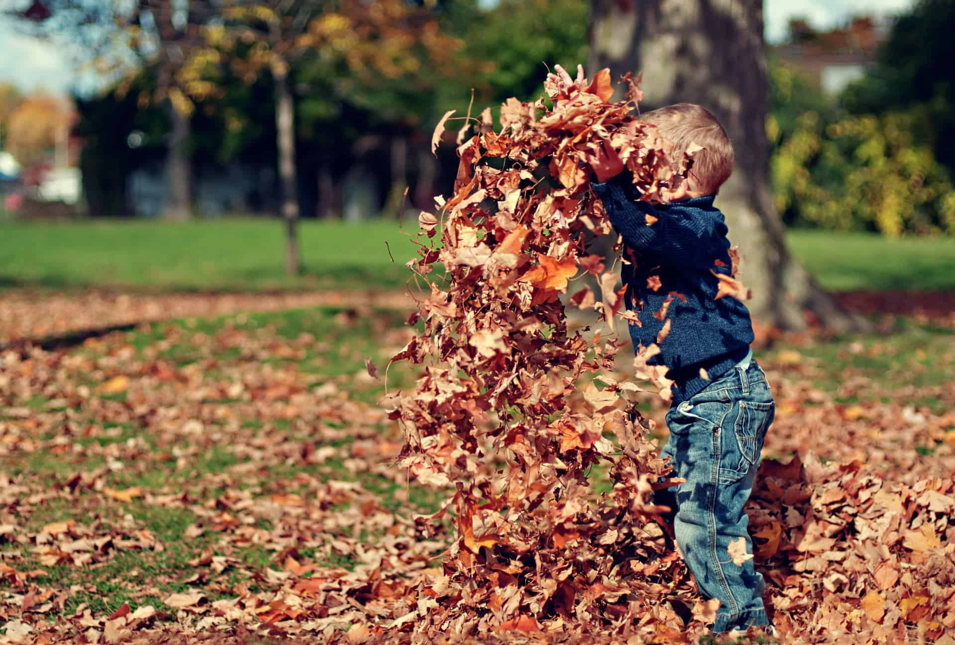 Autumn Leaves Child Play Fun